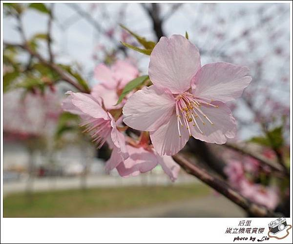 3月葳立機電賞櫻 (54)