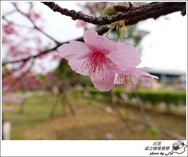 3月葳立機電賞櫻 (49)
