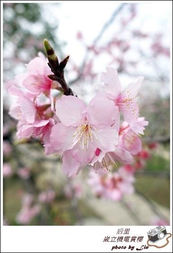 3月葳立機電賞櫻 (175)