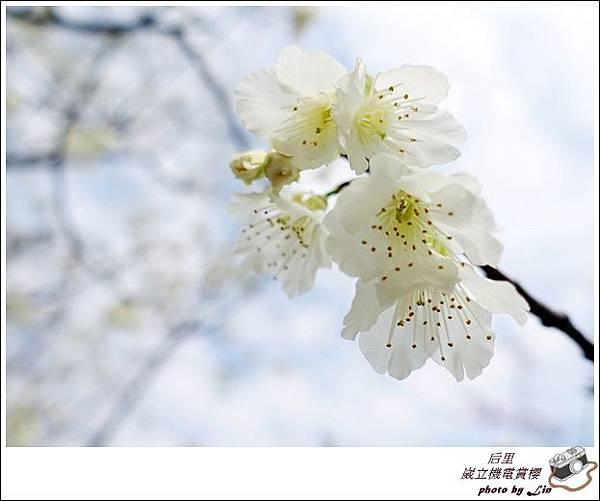 3月葳立機電賞櫻 (189)