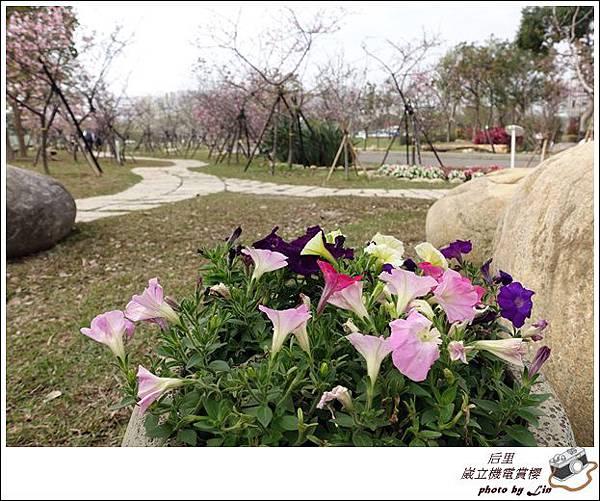 3月葳立機電賞櫻 (91)