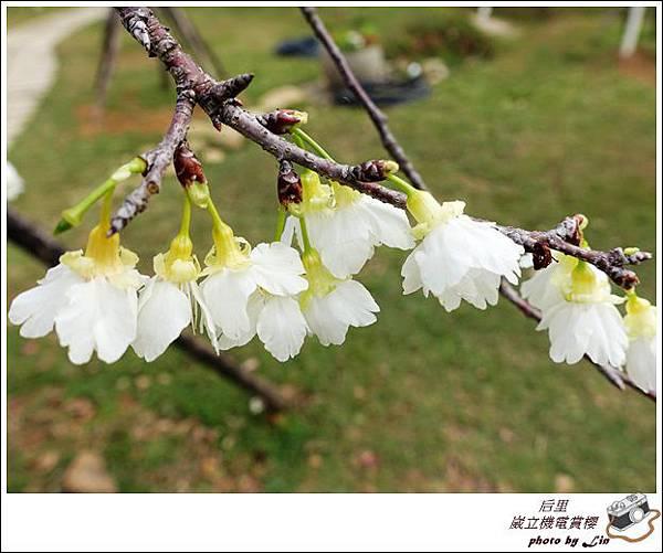 3月葳立機電賞櫻 (128)