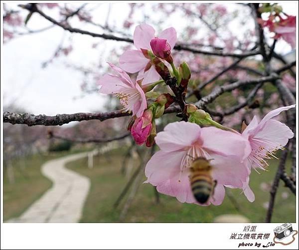 3月葳立機電賞櫻 (142)