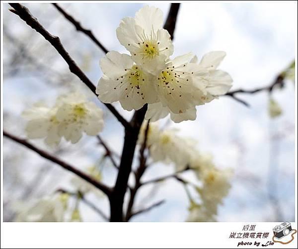 3月葳立機電賞櫻 (185)