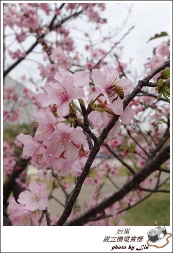 3月葳立機電賞櫻 (82)