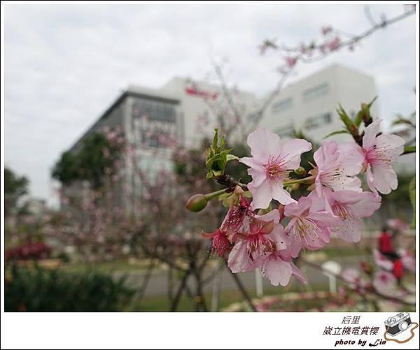 3月葳立機電賞櫻 (98)