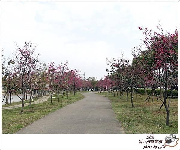 3月葳立機電賞櫻 (219)