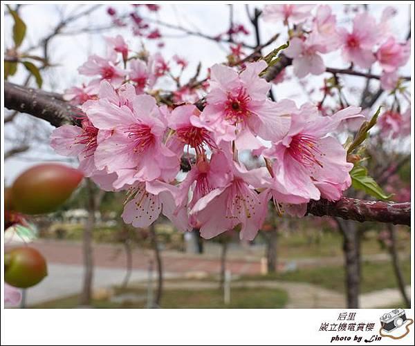 3月葳立機電賞櫻 (229)
