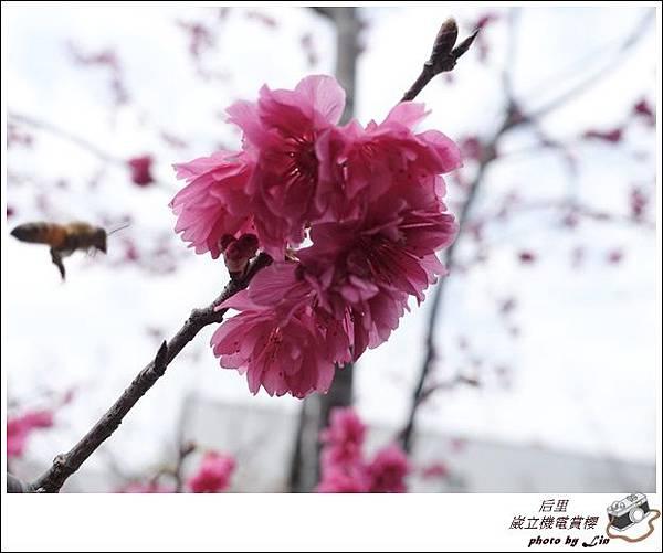 3月葳立機電賞櫻 (222)