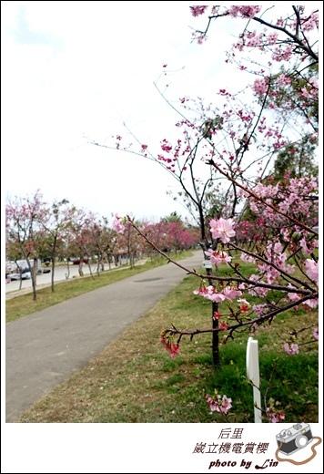 3月葳立機電賞櫻 (208)