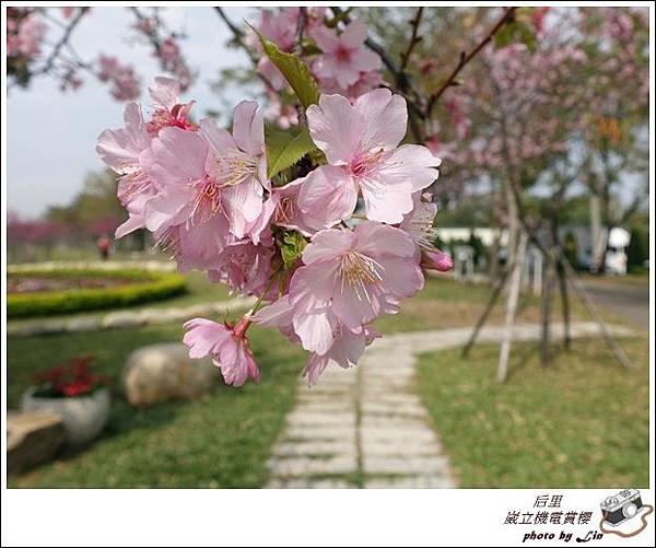3月葳立機電賞櫻 (263)