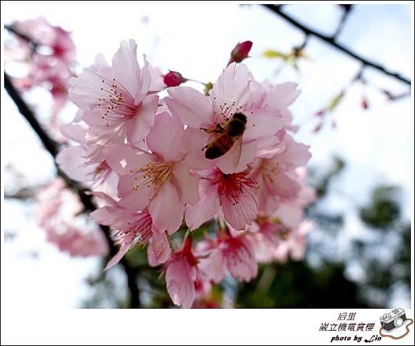 3月葳立機電賞櫻 (333)