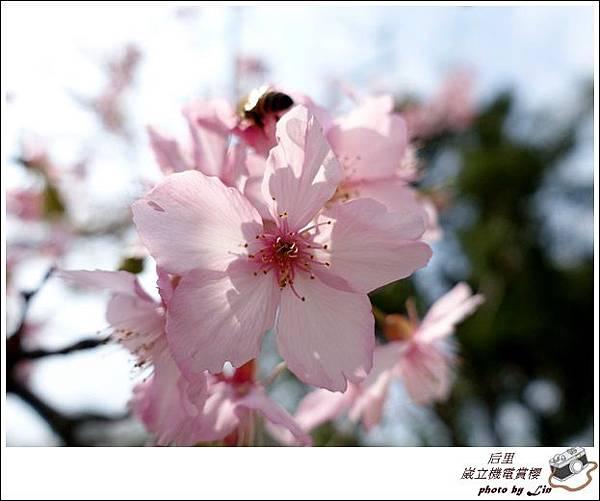 3月葳立機電賞櫻 (326)