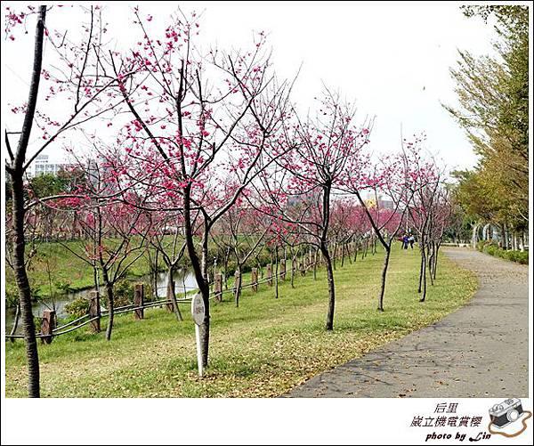 3月葳立機電賞櫻 (346)