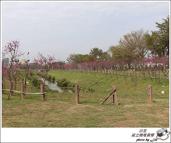 3月葳立機電賞櫻 (238)
