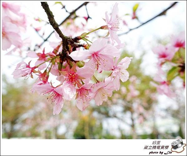 3月葳立機電賞櫻 (308)