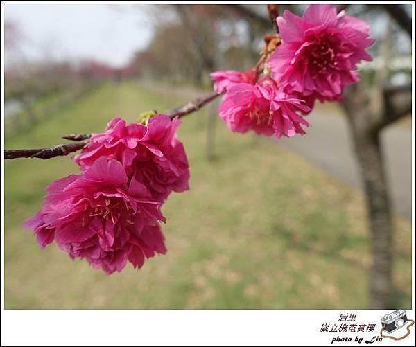3月葳立機電賞櫻 (353)