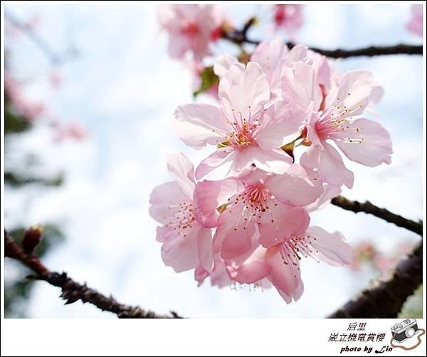 3月葳立機電賞櫻 (306)