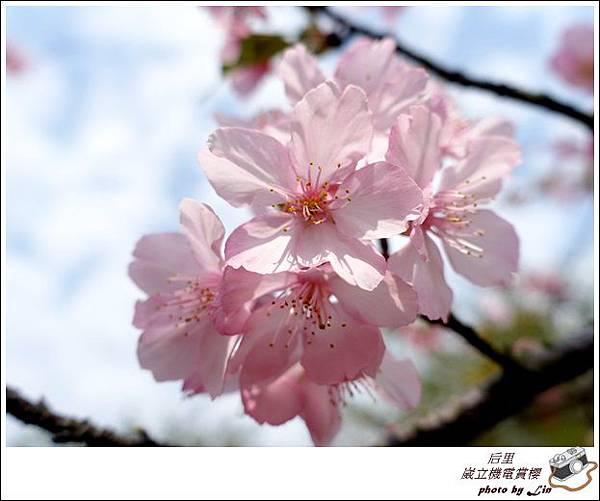 3月葳立機電賞櫻 (311)