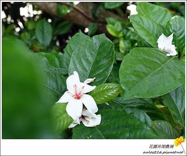 花露農場 (4)