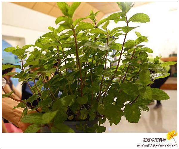 花露農場 (35)