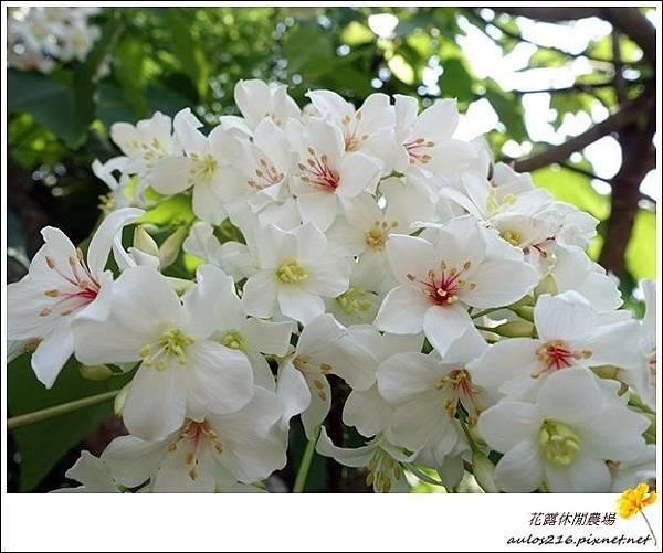 花露農場 (128)