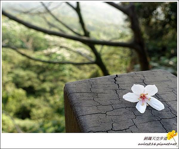 銅鑼天空步道 (3)