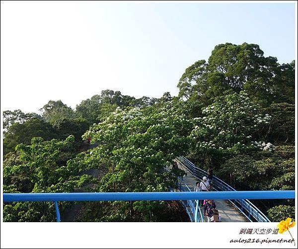 銅鑼天空步道 (14)