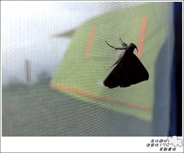 港寮枝179(24露) (136)