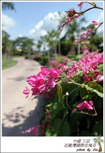 海南島 577