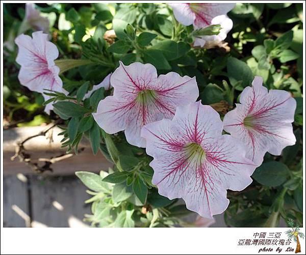 海南島 581