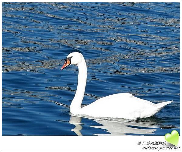 D2琉森湖 (57)