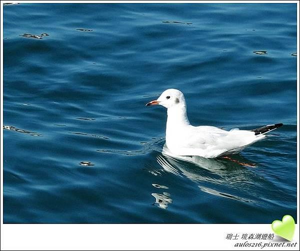 D2琉森湖 (47)