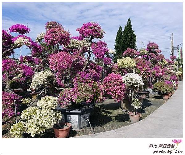 輝豐園藝 (69)