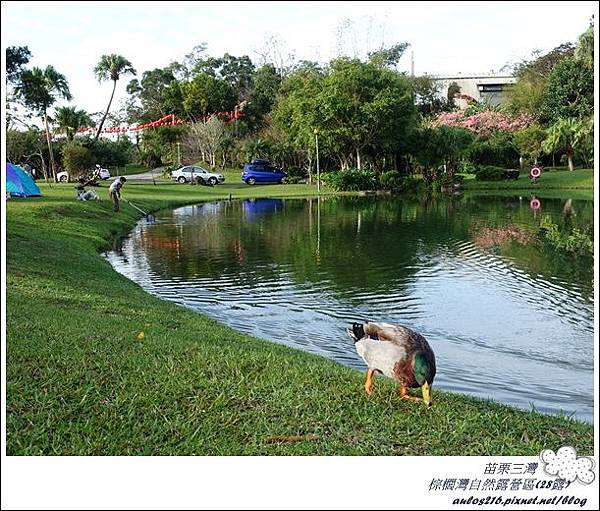 棕櫚灣自然露營區 28露 (217)