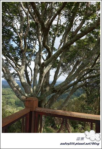 棕櫚灣自然露營區 28露 (267)