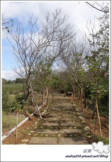 棕櫚灣自然露營區 28露 (250)
