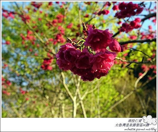 2018太魯灣30露 (135)