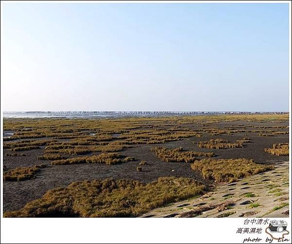 高美濕地 (6)