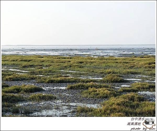 高美濕地 (28)