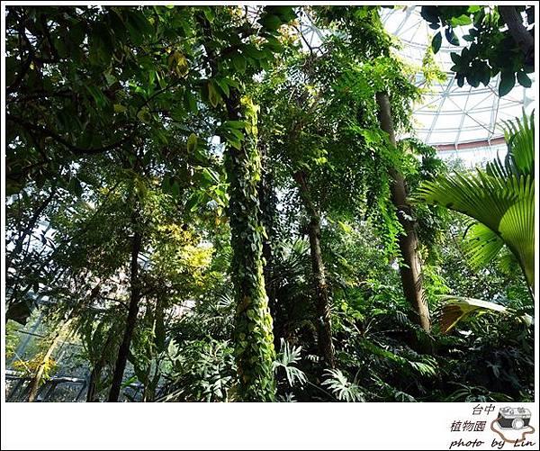 植物園、科博館 (33)