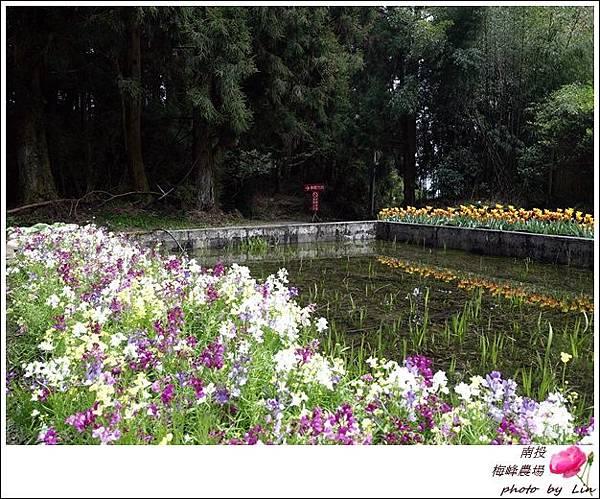 2018梅峰農場 (18)