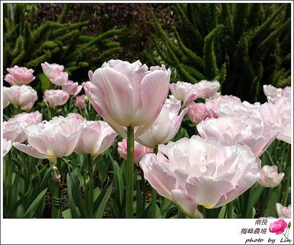 2018梅峰農場 (96)
