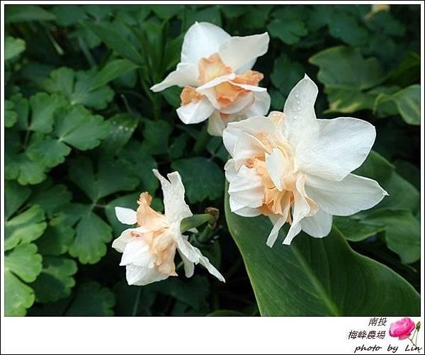 2018梅峰農場 (84)