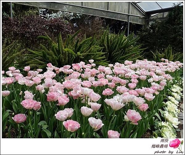 2018梅峰農場 (101)