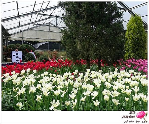 2018梅峰農場 (104)