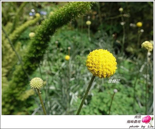 2018梅峰農場 (94)