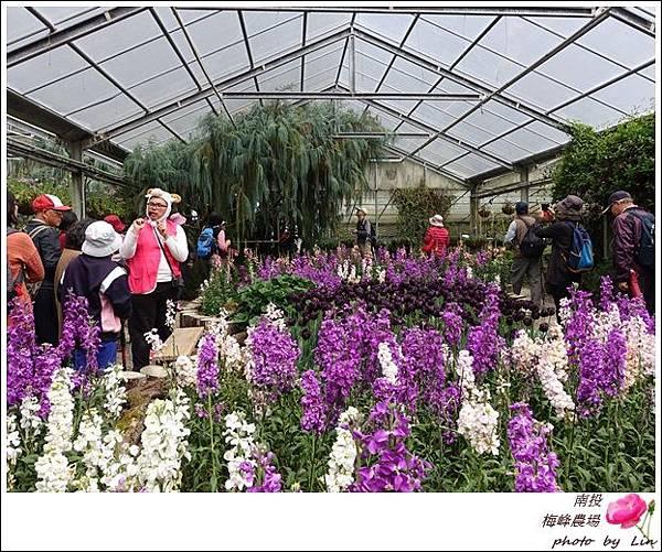 2018梅峰農場 (162)