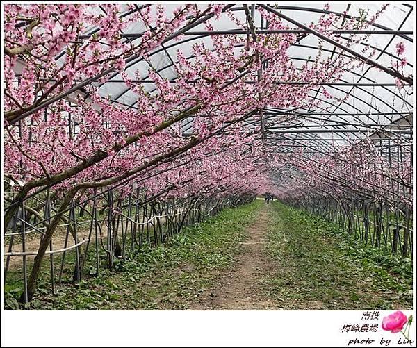 2018梅峰農場 (239)