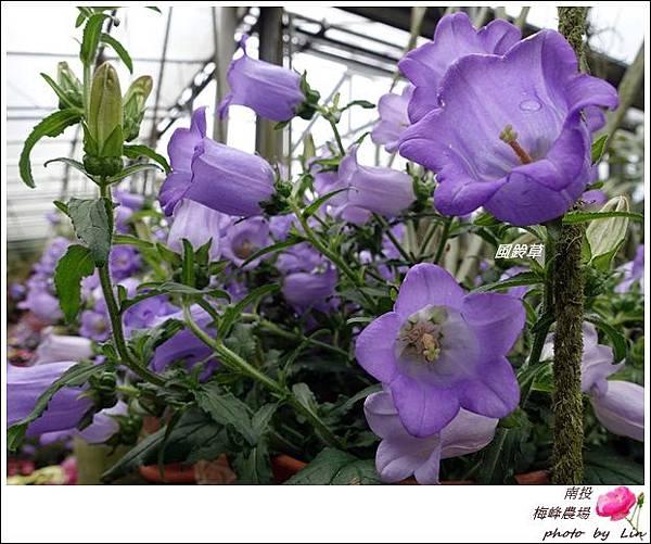 2018梅峰農場 (191)